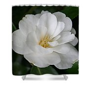 Snow White Camellia Shower Curtain