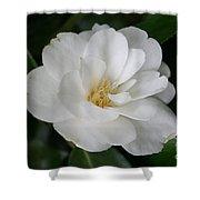 Snow White Camellia Shower Curtain