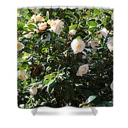 White Camellias Shower Curtain by Carol Groenen