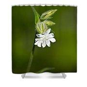 White Campion Flower Shower Curtain