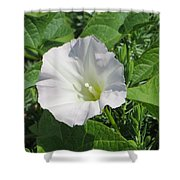 White Candour Shower Curtain