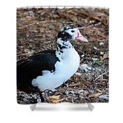 White Chested Muscovy Shower Curtain