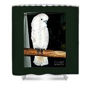 White Cockatiel-loreto Mx. Shower Curtain