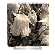 White Columbine Lanterns Monochrome Horizontal Shower Curtain