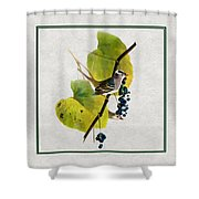White Crowned Finch Square Shower Curtain