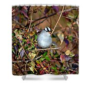 White Crowned Sparrow Shower Curtain