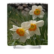 White Daffies Shower Curtain