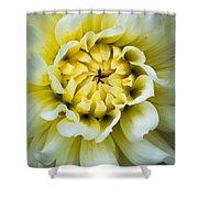 White Dahlia Shower Curtain