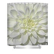 White Dahlia Square Shower Curtain