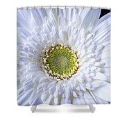 White Daisy Close Up Shower Curtain