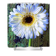 White Daisy With Green Wall Shower Curtain