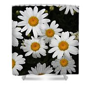 White Daisy's On The Rim Shower Curtain