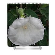 White Datura Shower Curtain