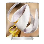 White Dog Tooth Violet Shower Curtain