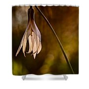 White Dogtooth Violet Shower Curtain