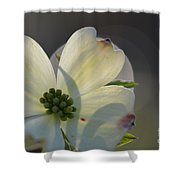 White Dogwood Blooms Series Photo K Shower Curtain