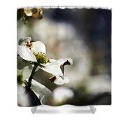 White Dogwood Flowers Shower Curtain
