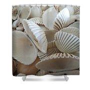 White Double Ark Shells Shower Curtain