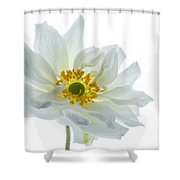 White Double Japanese Anemone Shower Curtain