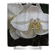 White Dream Orchid Shower Curtain