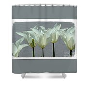 White Early Dawn Tulips White Bordered Shower Curtain
