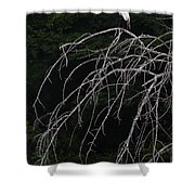 White Egret   #9120 Shower Curtain