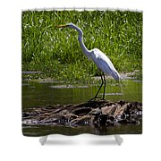 White Egret And Snapping Turtles Shower Curtain