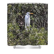 White Egret In The Swamp Shower Curtain
