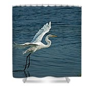 White Egret Landing Shower Curtain