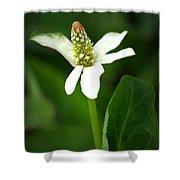 White Elegance Shower Curtain
