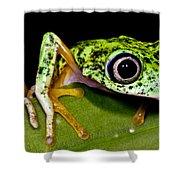 White-eyed Leaf Frog Shower Curtain