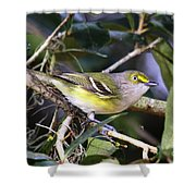White-eyed Vireo Shower Curtain
