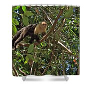 White-faced Capuchin Monkey In Manuel Antonio National Preserve-costa Rica Shower Curtain