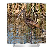 White-faced Ibis In The Wetlands Shower Curtain