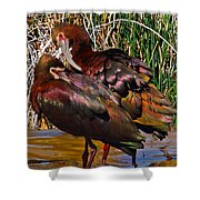 White-faced Ibises Shower Curtain