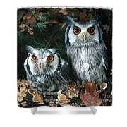 White Faced Scops Owl Shower Curtain