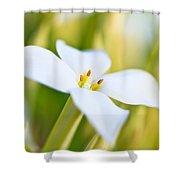 White Flower 2 Shower Curtain