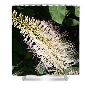 White Flower Panicle Shower Curtain