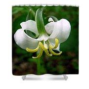 White Flowering Rose Trillium Shower Curtain