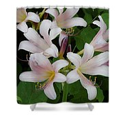 White Flowers 1 Shower Curtain