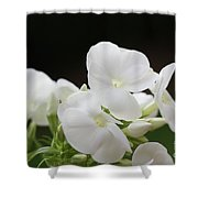 White Flowers 3 Shower Curtain