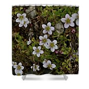 White Flowers And Moss Shower Curtain