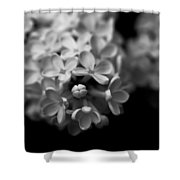 White Flowers In Black And White Shower Curtain