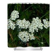 White Flowers In Green Field Shower Curtain
