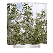 White Flowers On Branches Shower Curtain