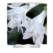 White Flute Blooms Shower Curtain