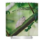 White Frog Shower Curtain
