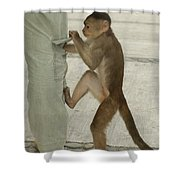White-fronted Capuchin Checking Pocket Shower Curtain