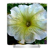 White Garden Petunia Shower Curtain