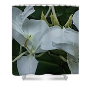 White Ginger Lily Shower Curtain